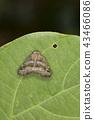 แมง,แมลง,ธรรมชาติ 43466086
