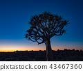 landscape sky tree 43467360