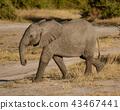 สัตว์,สัตว์ต่างๆ,ช้าง 43467441