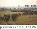 누우의 무리 (케냐) 43469397