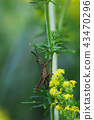 Small locust sits on plant 43470296