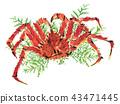 King crab 43471445