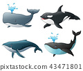 Set of sea marine fish 43471801
