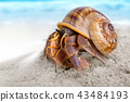 Colorful hermit crab on the beach. 43484193