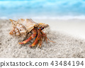 Colorful hermit crab on the beach. 43484194