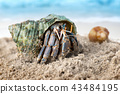 Colorful hermit crab on the beach. 43484195
