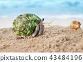 Colorful hermit crab on the beach. 43484196