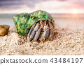 Colorful hermit crab on the beach. 43484197