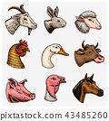 Farm animals. Head of a domestic horse pig goat cow alpaca llama rabbit sheep. Logos or emblems for 43485260