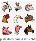 Farm animals. Head of a domestic horse pig goat cow alpaca llama rabbit sheep. Logos or emblems for 43485260