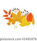 Set of colorful autumn leaves and berries 43485876