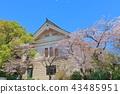 야스쿠니진쟈, 야스쿠니 신사, 벚꽃 43485951