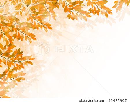 秋葉槭樹秋天背景 43485997