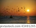 海 海邊 海灘 43491265