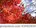 葉 樹葉 葉子 43492934