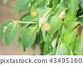 과일, 과실, 열매 43495160