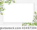 신록 잎 흰색 프레임 공백 43497304