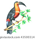 Hornbill Bird on branch watercolor isolated  43500314