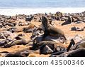 animal, beach, coast 43500346