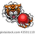 tiger, cricket, ball 43501110