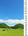 홋카이도 푸른 하늘과 순종 목장 43501301