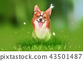 Digital illustration art painting a corgi dog 43501487