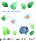 Flowers watercolor collection on white background  43501625