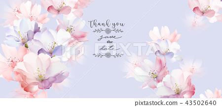 優雅的玫瑰花花卉 43502640