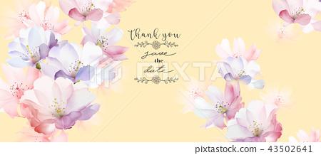 優雅的玫瑰花花卉 43502641