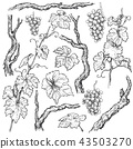 Hand Drawn Grape Branches and Vine  Set 43503270