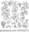 Hand Drawn Grape Branches  Set 43503271