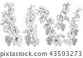 Hand Drawn Monochrome Grape Branches 43503273