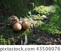 도토리, 자연, 나무 43506076