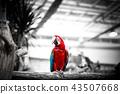 조류, 동물, 동물원 43507668