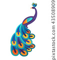 Peacock with Bright Feathers Isolated Illustration 43508909