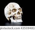 Close up Human skull on the black background. 43509483