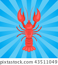 Crawfish or Crawdads, Freshwater Lobster Yabbies 43511049