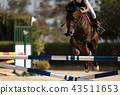 Jockey on her horse leaping over a hurdle 43511653