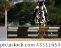 Jockey on her horse leaping over a hurdle 43511654