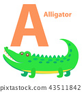 alligator letter alphabet 43511842