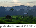 Green rice field on mountain background at Bali 43512012