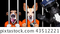 dogs behind bars in jail prison 43512221