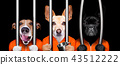 dogs behind bars in jail prison 43512222
