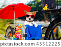 dog on a bike trailer on summer vacation 43512225