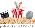 dog to the movies 43512233