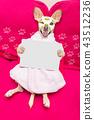 wellness beauty mask  spa  dog 43512236