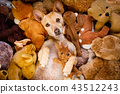 cozy  dog in bed with teddy bears 43512243
