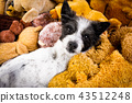 cozy  dog in bed with teddy bears 43512248