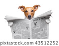 dog reading newspaper 43512252