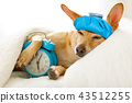 dog  sick or ill  in bed 43512255
